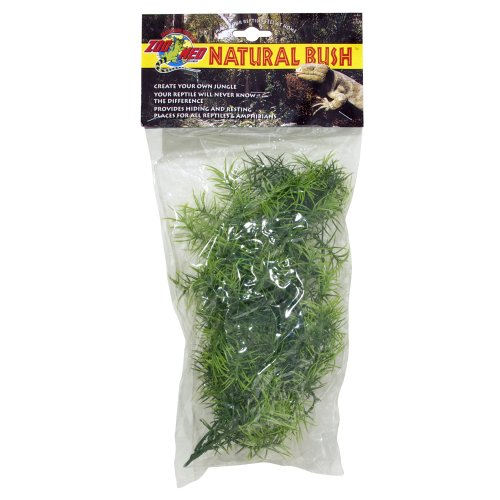 Natural Bush Plant - Cashuarina 46cm