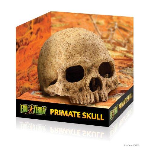 Primaat Skull