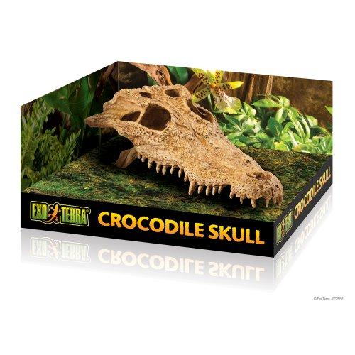 Krokodil Skull