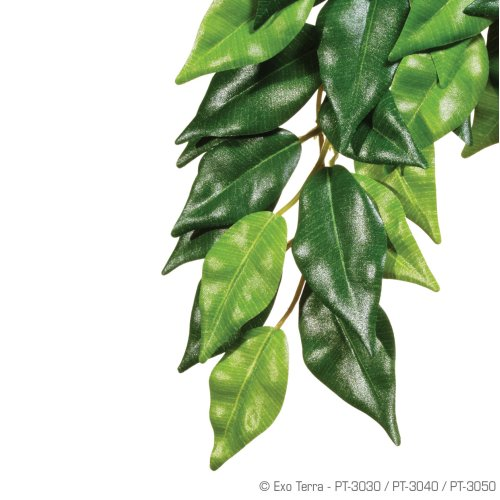 Ficus Silk Medium