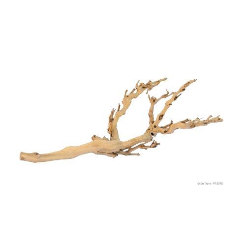 Forest Branch Medium
