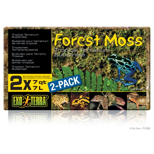 Forest Moss  2-Pack