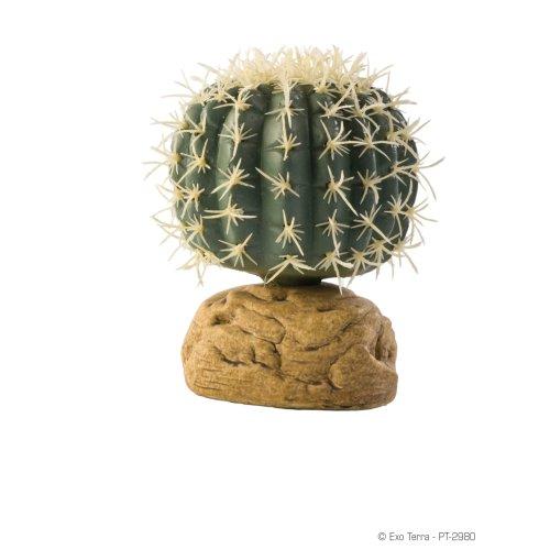 Barrel Cactus - Small