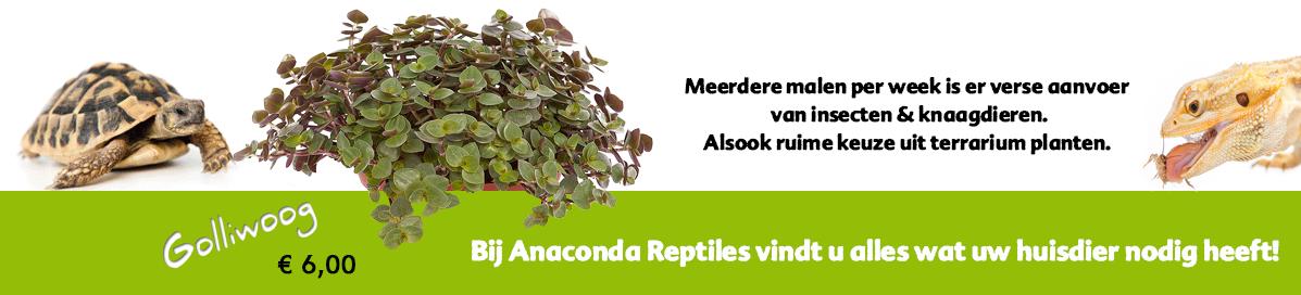Meerdere malen per week is er verse aanvoer  van insecten & knaagdieren. Alsook ruime keuze uit terrarium planten.
